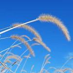 道端の草はネコを魅了するワールドワイドな凄いヤツ