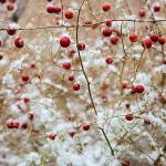 初雪 試される大地、北海道に冬の訪れと十勝の冬