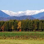 紅葉は北から東京へ 見頃時期と観光スポット