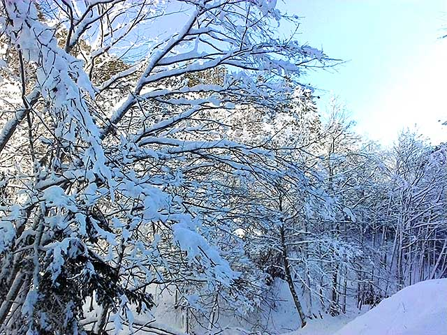 winter forest2