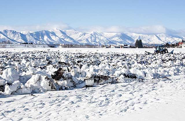 a winter field
