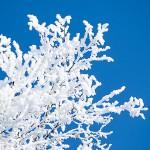 樹氷 よく見てみた その条件と仕組み