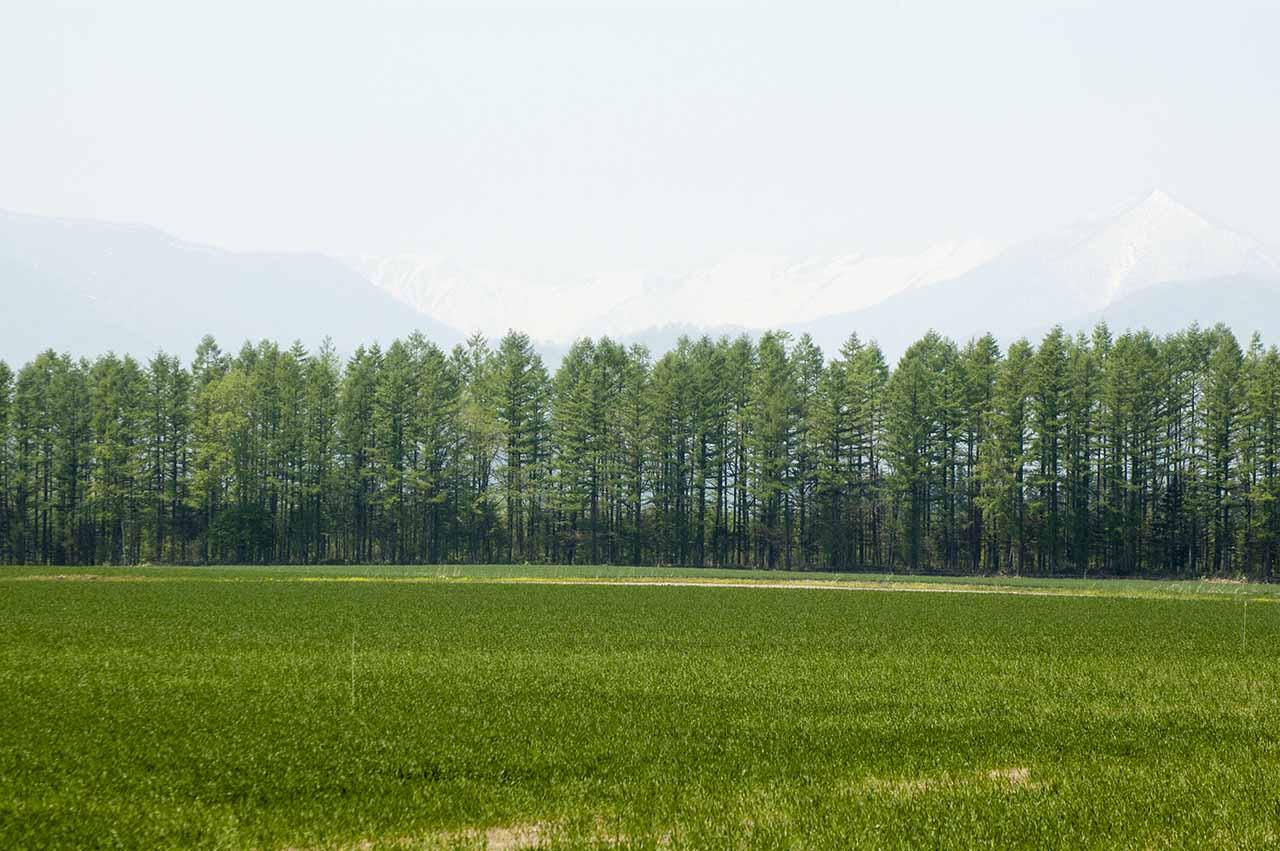 北海道 十勝 防風林