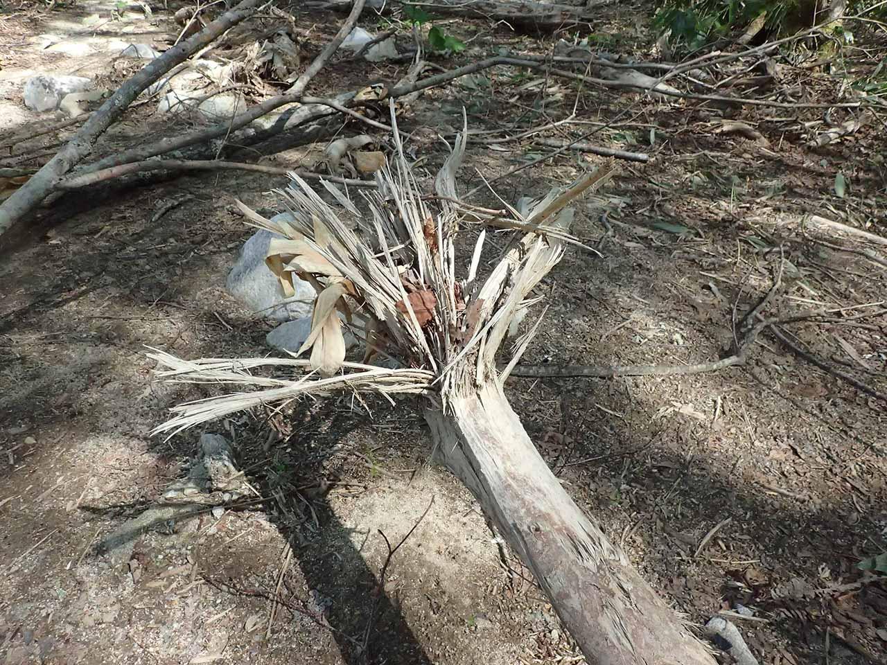 戸蔦別川 洪水 倒木 流木