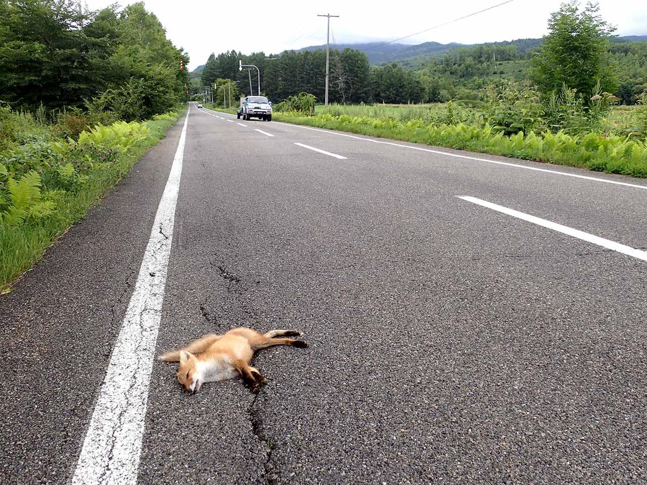 キタキツネ ロードキル 子狐