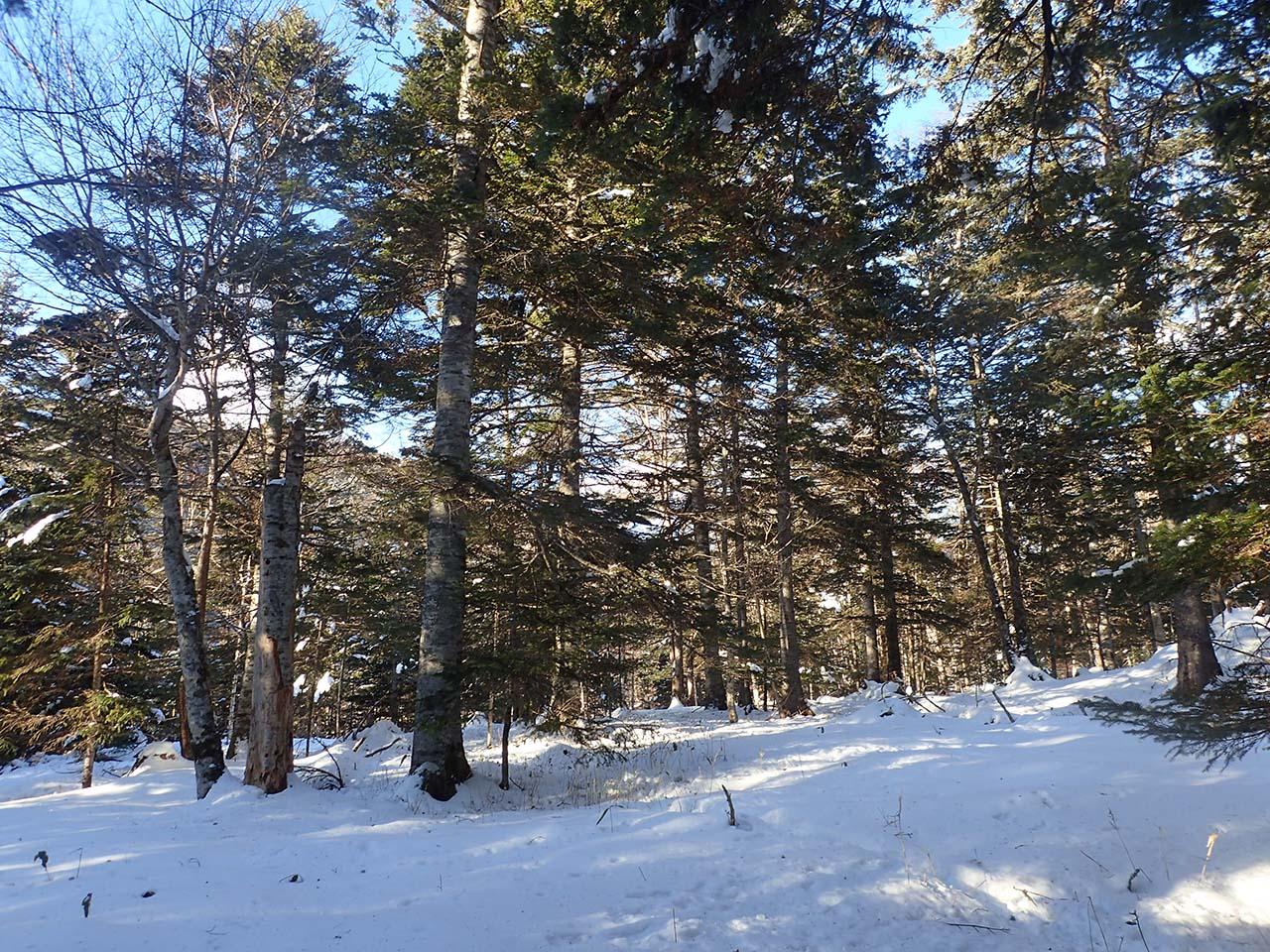 北海道 冬山 狩猟