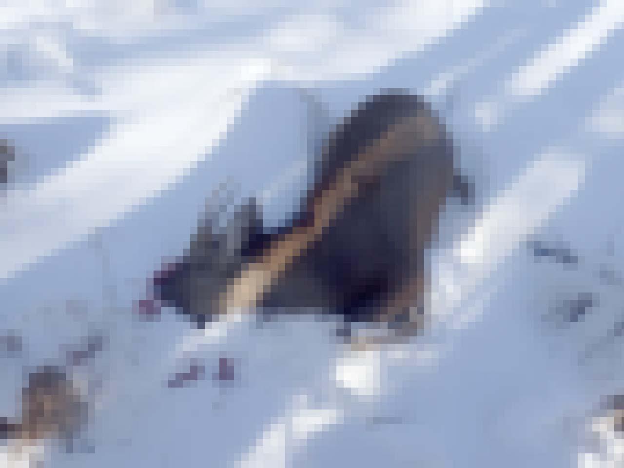 エゾシカの狩猟