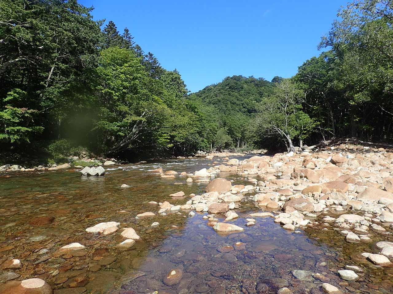 サケが遡上する河川