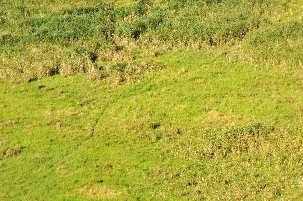 釧路湿原の獣道