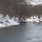 狩猟自粛その3 北海道森林管理局への3つの質問 安全な狩猟を目指して
