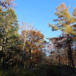 令和元年シーズン 国有林と道有林の狩猟は平日禁止へ