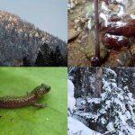 -20℃の真冬の北海道の雪の下多くの生物たちが生き抜いている