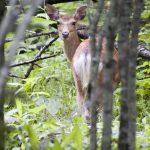 なぜ狩猟を辞めるのか? 辞める理由は維持コストと法規制
