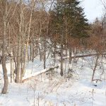 スキーを履いて雪山へ狩猟Goto 猟場の風景やエゾシカ肉の処理や味など