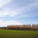 北海道を守る防風林 高さと樹種とその効果