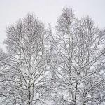 雪景色 2015年11月下旬北海道に大雪