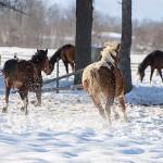人の生活に深く関わる動物「馬」 寿命や種類、ことわざ