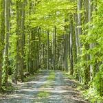 桂 森林浴のすゝめ ストレスとガンをぶっ飛ばせ
