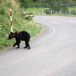 ソーセージはクマである 野生生物にエサを与えるということ その3