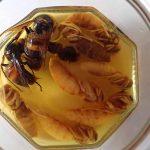 スズメバチ戦記 オオスズメバチ500匹vsモーリーと仲間たち