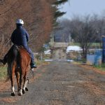 馬と歩く散歩道 昔の猟師は馬に乗って狩猟する