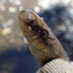 ヘビがでてくる猟師の昔話 「吾唯足知」