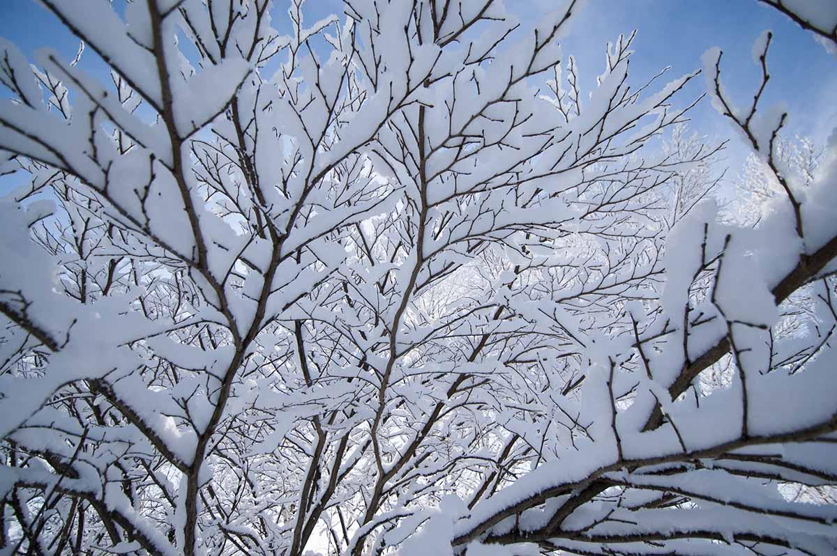 樹氷の様子