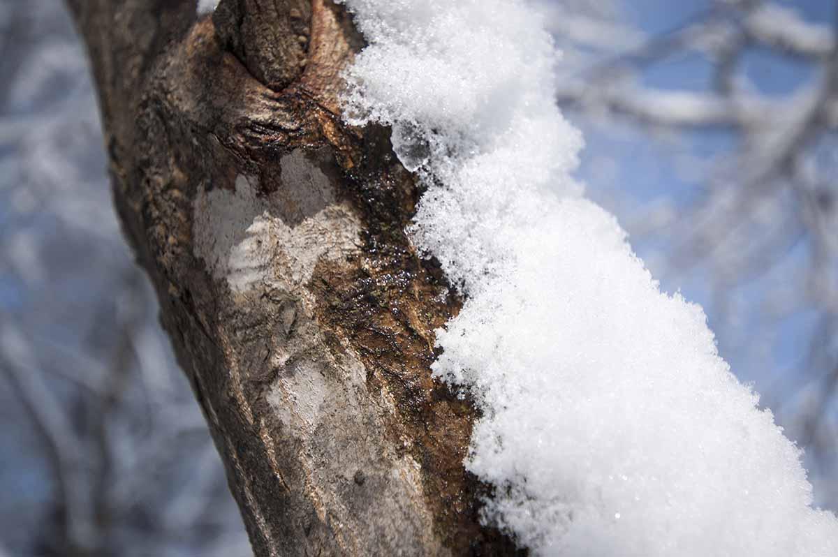 枝にかかる雪