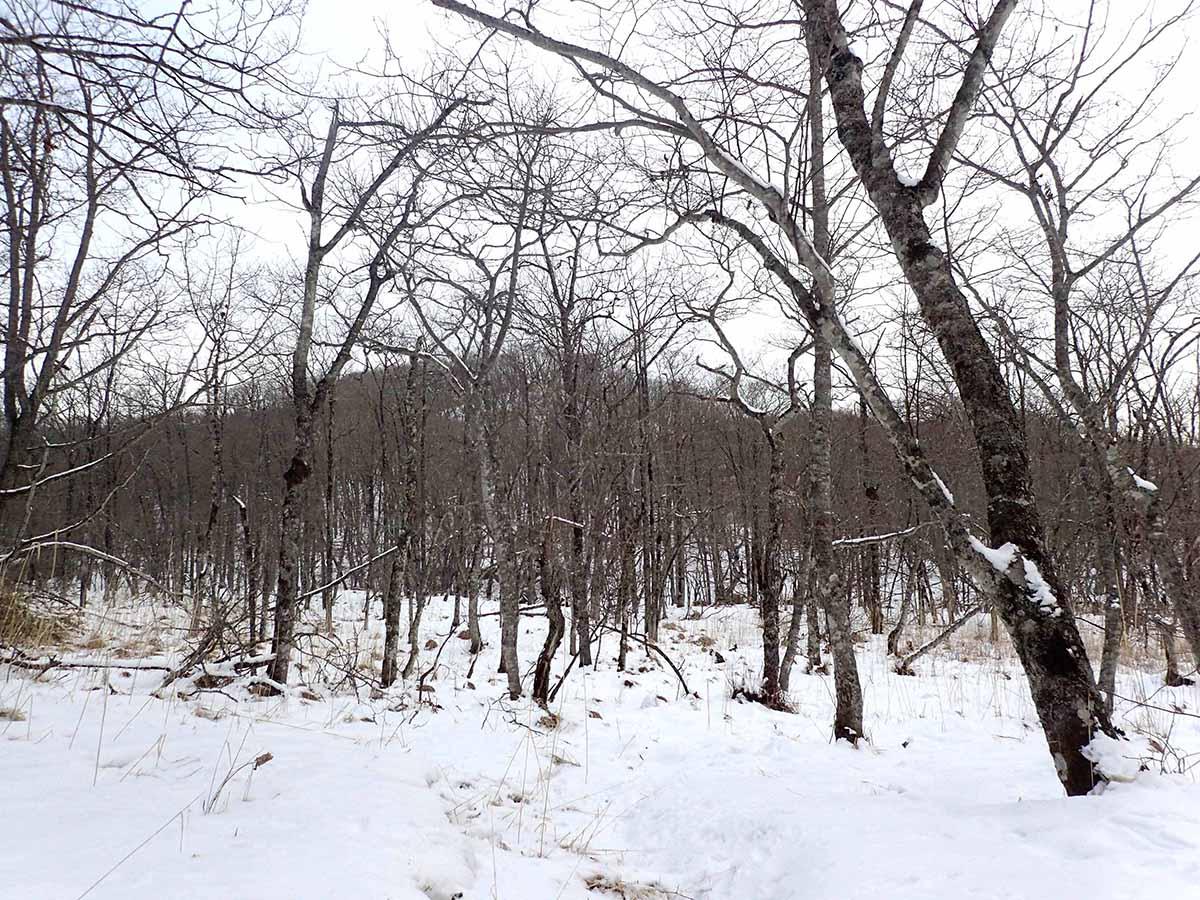 エゾシカの猟場
