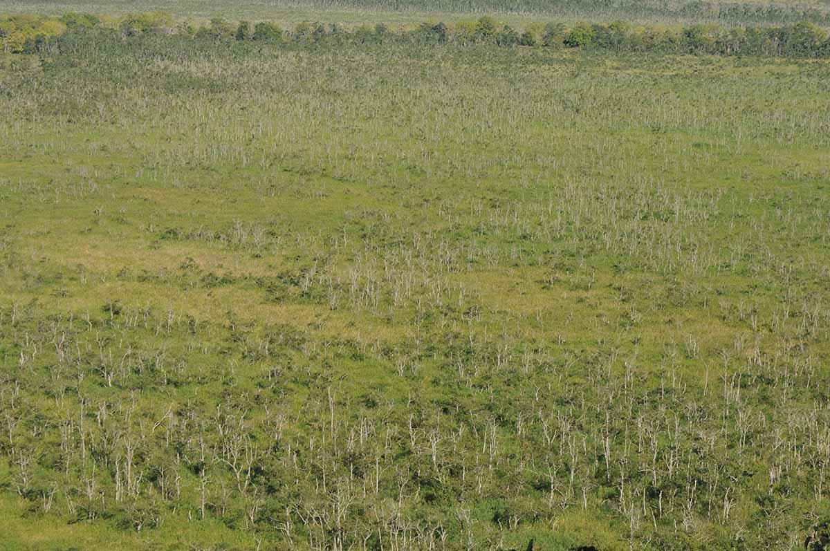 樹林化する釧路湿原
