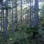 狩猟で国有林や道・県有林に入るには入林許可が必要 入林許可ってなに?
