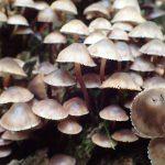 キノコの山 人知れずひっそりと生える菌類たち