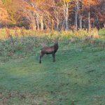 狩猟とはほとんどが獲物を探すことに費やされる
