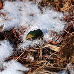 -20℃を超える厳寒の北海道を虫たちはどう越冬しているのか?
