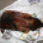 鶏(ニワトリ)のさばき方