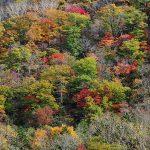 静岡の友人に送る北海道の秋の風景
