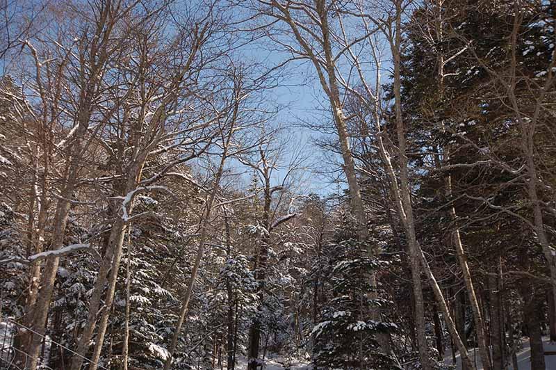北海道の林