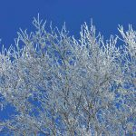 樹氷ができたので歩いてきた 樹氷の条件や仕組み
