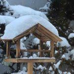 3月の北海道は雨も雪も降る 雪の中のシメを見て己の至らなさを知る