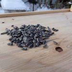 バードテーブルに野鳥が来ない理由を3つ考えてみた 対策と検証実験