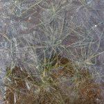 秋まき小麦は氷の下にあって初めて穂がみのる 小麦について日本一の小麦産地十勝から