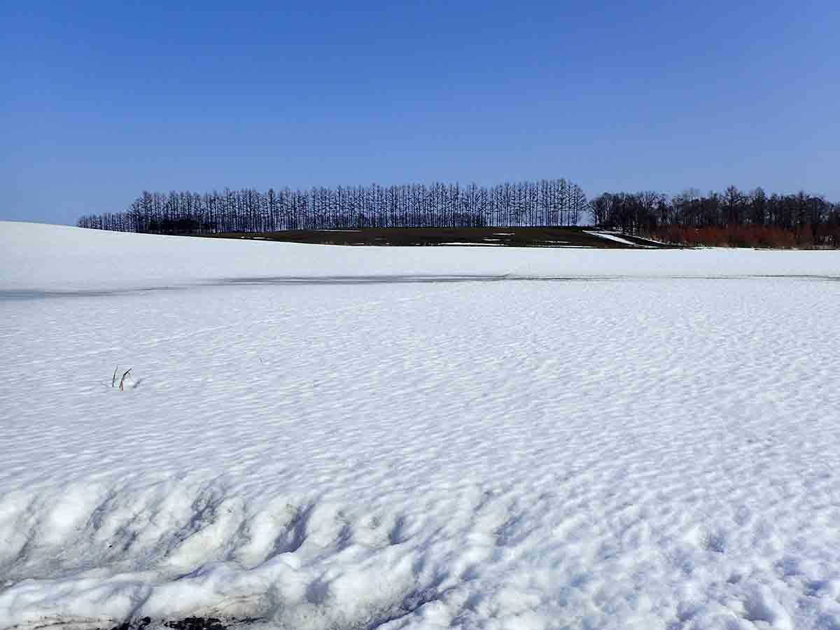 北海道の畑