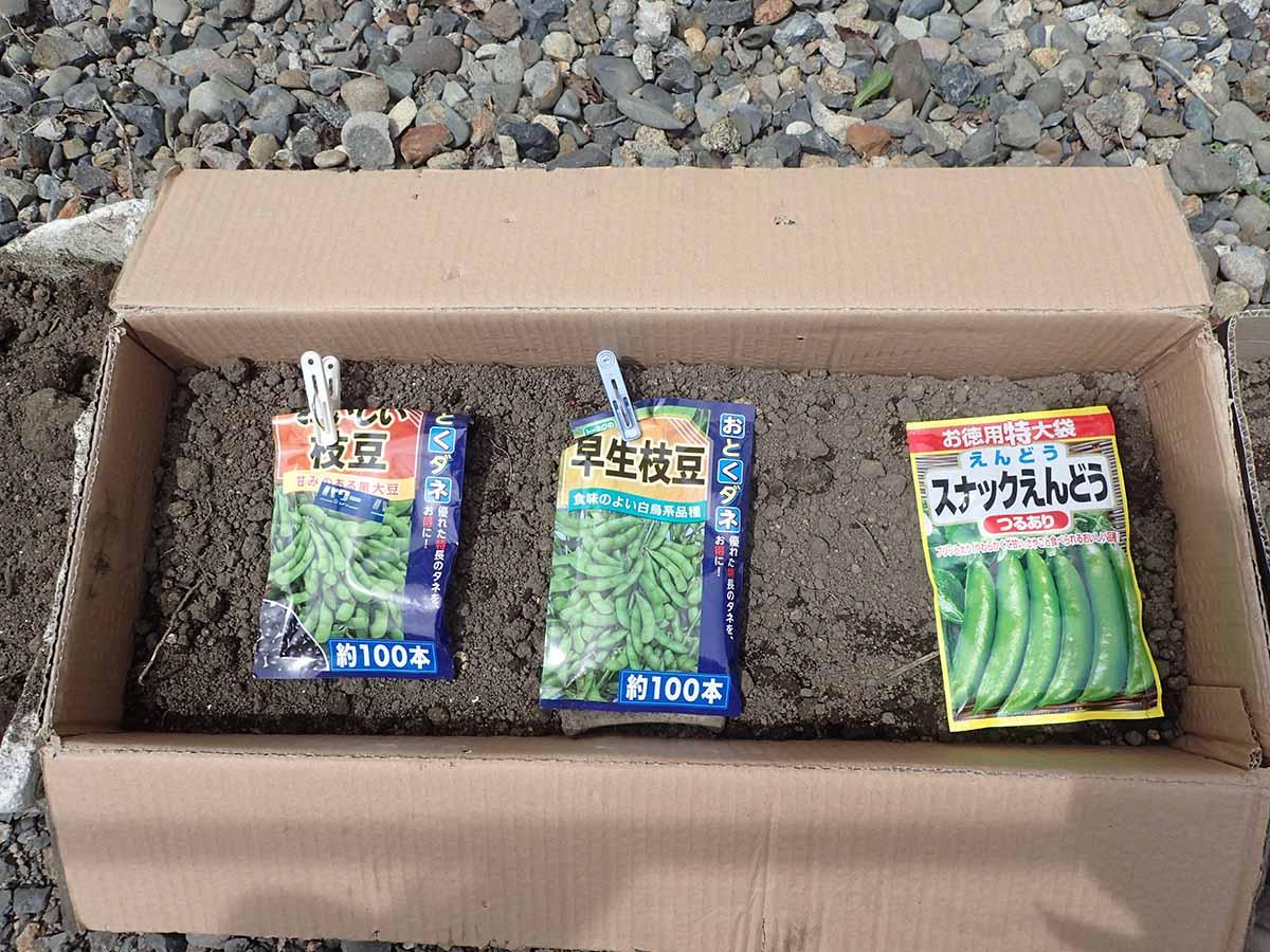 枝豆とスナックエンドウの種