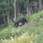 事故記録 2021.6北海道羅臼町ヒグマによる犬襲撃事件 ヒグマが夏に犬を襲う理由