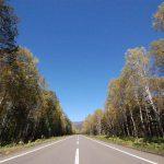 北海道ドライブ 初秋の白樺並木道をドライブすると心地よい話