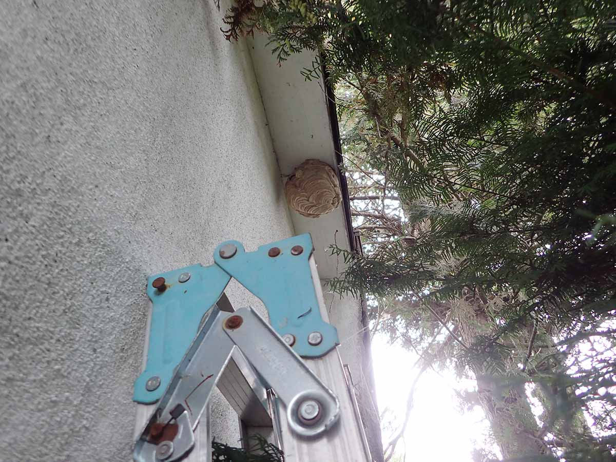 ハチの巣撤去